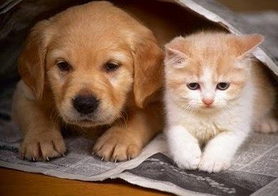 كورونا ينتقل للحيوانات الأليفة من البشر بمعدلات عالية للغاية!